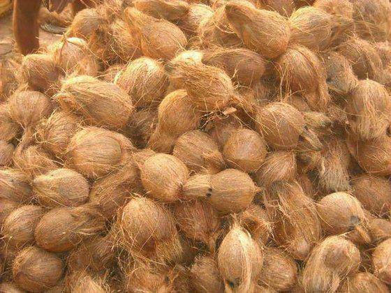 Semi hushed coconuts