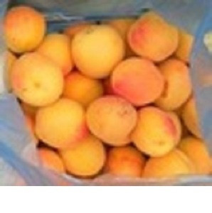 Fresh apricot, Organic Fresh apricot, Fresh Apricot fruit from South Africa