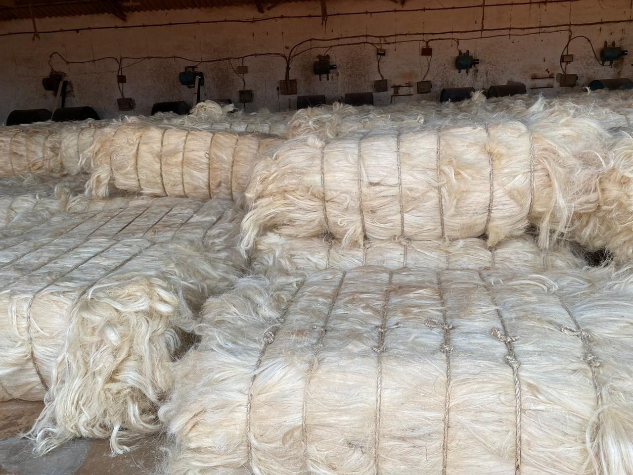 Natural sisal fiber