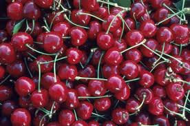 Cherries Fruit/Natural Cherries Fruit for sale/High Quality Cherries Fruit