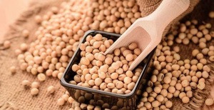 Wholesale Dried Yellow Soybean / Soya Seeds