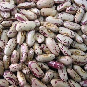Large Size Long Types Of White Kidney Beans Dry Large Size Long Types Of White Kidney Beans Dry Suppliers Manufacturers Tradewheel