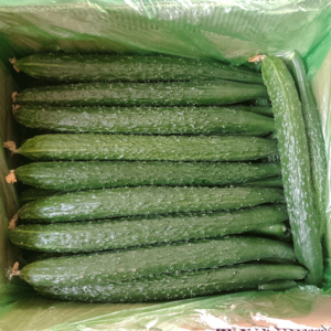 Product 100% Vegetables Green Fresh Cucumber For Sale Best Price