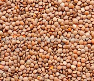 Red lentils whole/Masur dal/whole red lentils