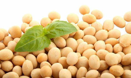 NON GMO DRIED CHEAP SOYBEANS