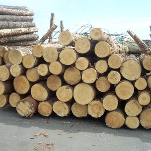 Beech logs available in good quality and good prices