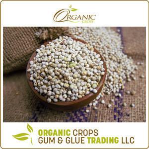 Rich Quality Pure Sorghum Grain Seeds