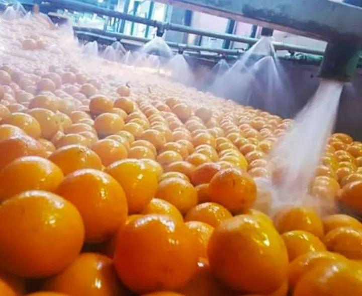 Fresh orange with high quality