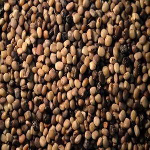 Best Quality Guar Seeds