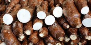 Fresh Cassava,FRESH CASSAVA TUBERS and SWEET TAPIOCA FRESH CASSAVA