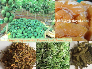 Healthy dried papaya pieces, papaya seeds, leaf, flower