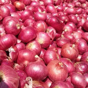 Quality Fresh Onion New Crop for Wholesale / Onions