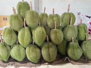Sweetness Mon thong Durian popular in Thailand