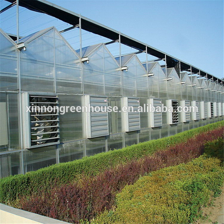 Venlo PC Sheet  Greenhouse for Agriculture  Greenhouse Planting  for hot sale