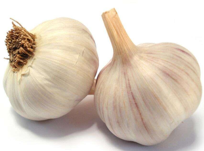 Fresh garlic 5-6cm