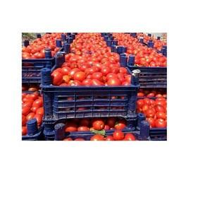 Fresh Tomatoes,FRESH ORGANIC TOMATO and Fresh Red Tomato,Fresh Green Tomatoes