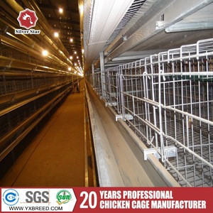 Silver star egg production project poultry farming chicken eggs laying cage