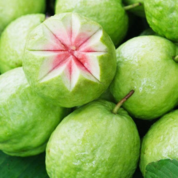 High quality Fresh Guava Fruit Wholesale Cheap price Global Gap Bio Clean Green Guava
