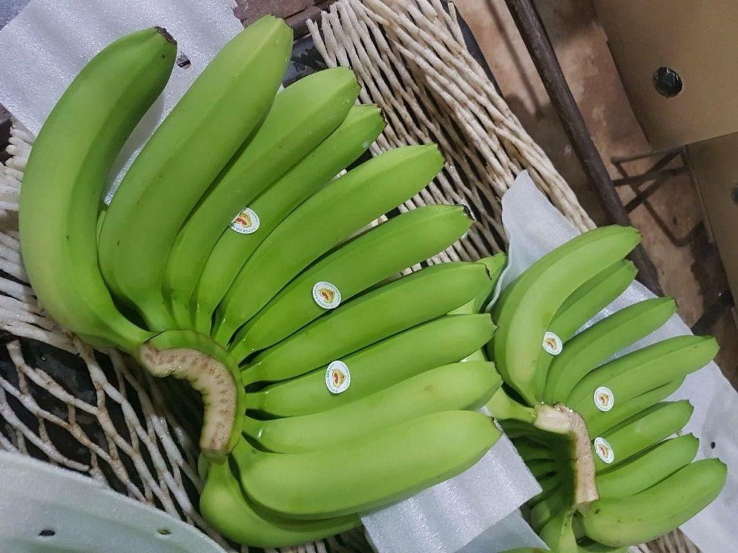 High quality Fresh Green / yellow Cavendish Banana Bio Clean Global Gap Cheap Price Wholesale made in Vietnam