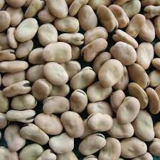 Golden Supplier of peeled dry broad beans