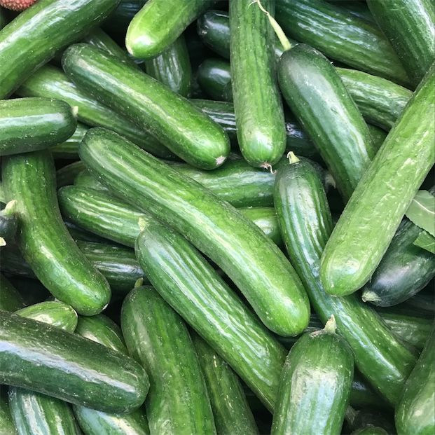 Fresh and healthy cucumber Fresh Vegetable