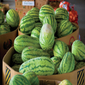 Fresh Melons for sale now