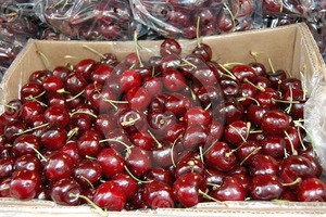 Top sale high quality new crop sweet fresh cherry