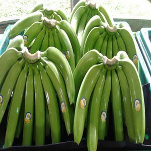 FRESH GREEN CAVENDISH BANANA/HIGH GRADE BANANAS