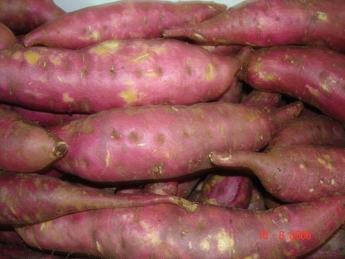 HOT SALE SALE ! Incredible Purple Sweet Potato with the low price in Viet Nam