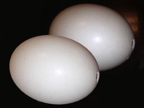 Ostrich Egg Shell For Decorate