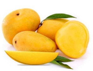 FRESH ALPHONSO MANGOES FOR SALE