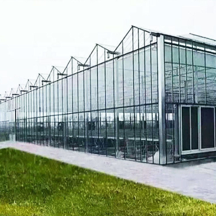 High-tech Greenhouses and Hydroponic Systems for Professional Growers green house