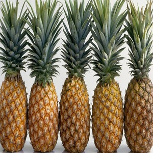 Wholesale Price Fresh Pineapple