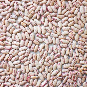 Lskb Light Speckled Kidney Beans Pinto Beans Sugar Beans Lskb Light Speckled Kidney Beans Pinto Beans Sugar Beans Suppliers Manufacturers Tradewheel