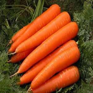 2018 Fresh new crop fresh carrot 10kg carton packing