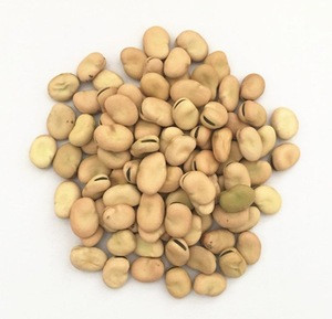 Chinese broad faba beans