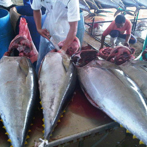 Seafood frozen whole round skipjack tuna fish 1.5kg up for sale