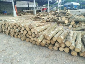Thailand rubber wood