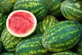 Wholesale Fresh Watermelon / Fresh Watermelon For Sale / Bulk Fresh Fruit Watermelon