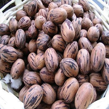Raw/roasted baked salted pecan nuts with shell