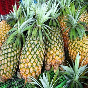 FRESH GOLDEN PINEAPPLE (MD2)