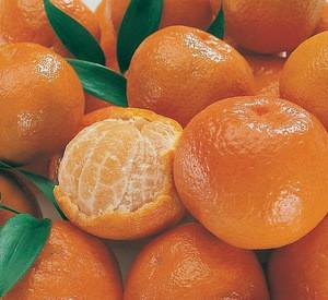 Fresh Navel oranges,Fresh Lemons,Fresh Mandarins Orange