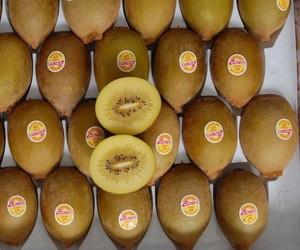 Good Price Quality Fresh Kiwi Fruits