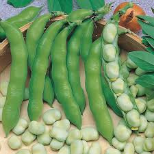 Wholesale Price of broad beans dried Fava Beans For Sale