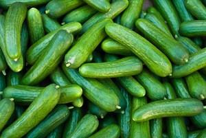 Quality fresh cucumber