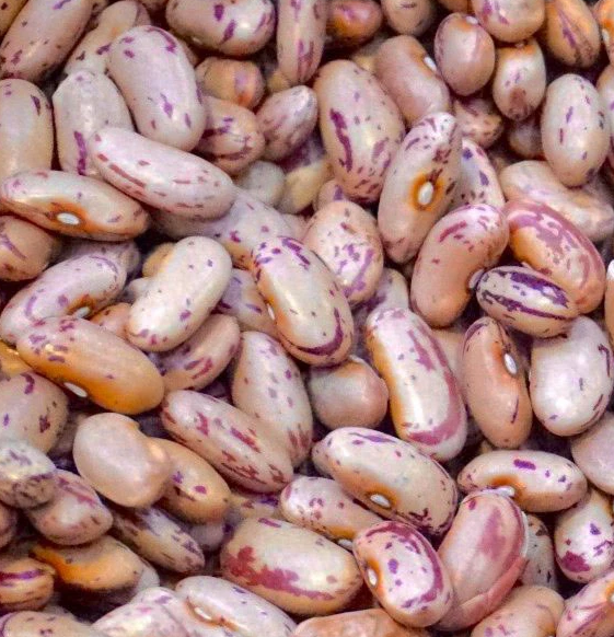 Red Speckled Sugar Beans