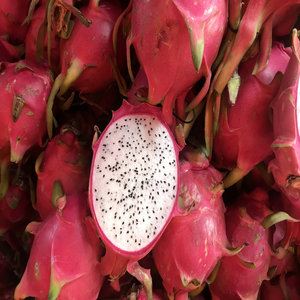 Fresh dragon fruit cheap price and best quality from Hong Thai farm