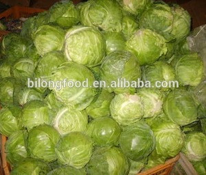 2019 new season fresh chinese round cabbage( Beijing cabbage) supplying all the year round to world