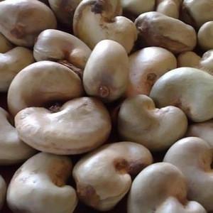 Dried Raw Cashew Nut In Shell