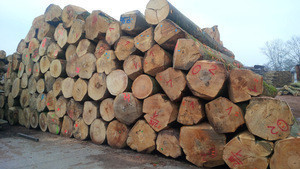 German beech logs